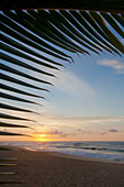 A coconut palm frond silhouette framing a beautiful sunrise at the beach on the North shore of Oahu; Honolulu, Oahu, Hawaii, United States of America