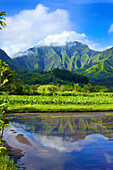 Mirror image of green, foliage covered mountains and fields of taro crops; Hanalei, Kauai, Hawaii, United States of America