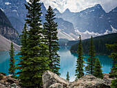 Stunning view of the rugged Canadian rocky mountain peaks and a tranquil turquoise Moraine Lake with forests along the shoreline; Field, British Columbia, Canada