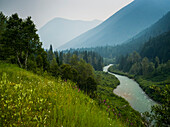 The Columbia River flowing through the Selkirk mountains with forests and wildflowers on the slopes; Revelstoke, British Columbia, Canada
