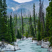 A jade coloured river flowing through a mountainous landscape and a coniferous forest; Radium Hot Springs, British Columbia, Canada