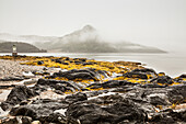 Seaweed and tide pools on the rocky shore along the Atlantic ocean coastline on a foggy day; Newfoundland, Canada