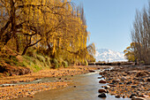Warm autumn scene of willow trees hanging over a stream. Snow-capped mountains stand on the horizon against a clear blue sky; Tupungato, Mendoza, Argentina