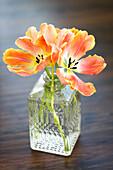 Peach coloured tulips in a decorative glass vase; Surrey, British Columbia, Canada