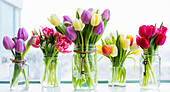 Bouquets of tulips in decorated glass jars in a row on a window sill; Surrey, British Columbia, Canada