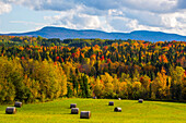 Landscape of forests on the hills with autumn coloured foliage and hay bales on lush green fields in the foreground; Iron Hill, Quebec, Canada