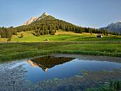 dog's head, walderalm, Grace forest, Karwendel, Tyrol, Austria