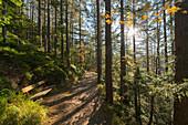 hiking trail to the Twenty Schiling view, Viennese house mountains, Lower Austria, Austria