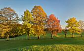 herbstlich verfärbte Bäume im Wienerwald, Zoblhof, Niederösterreich, Österreich