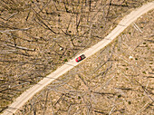 Aerial view of red pickup truck driving through forest of fallen trees after forest fire, Stanley, Idaho, USA