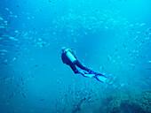 Scuba diver swimming among school of fish underwater, Kas, Antalya, Turkey