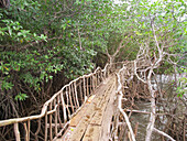 Wooden footbridge in forest, Philippines