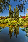 Summer reflection in a ponds of Parco giardino Sigurtà, Valeggio sul Mincio, Verona province, Veneto, Italy, Europe