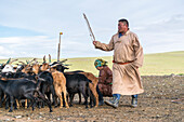 Mongolian nomadic man and woman working with goat livestock, Middle Gobi province, Mongolia