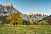 Eng, Riss Valley, Vomp, Schwaz district, Tyrol, Austria, Europe, Sycamore maple in autumn colors at sunrise with the Mount Spritzkar and Mount Grubenkar