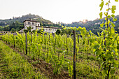 Sunrise on the ancient monastery of Astino surrounded by vineyards Longuelo, Province of Bergamo, Lombardy, Italy, Europe