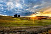 Sunset at San Quirico d'Orcia cypresses, Val d'Orcia, Tuscany, Italy