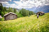 Armentara meadows in full bloom, Armentara, Alta Badia, South Tyrol, Italy, Europe