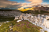 a beautiful sunset from the top of the Schlern (Sciliar) with alpine flowers in the foreground, Bolzano province, South Tyrol, Trentino alto Adige, Italy