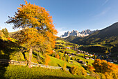 a view of Villnössertal (Val di Funes) with hot autumnal colors, Bolzano province, South Tyrol, Trentino Alto Adige, Italy