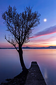 A lonely tree at the Arolo pier during an autumnal sunset, Arolo, Leggiuno, Lake Maggiore, Varese Province, Lombardy, Italy