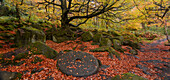 A millstone lies covered in red autumn leaves with the adjacent woodland in full autumn colour, Padley Gorge, Grindleford, Peak District National Park, Derbyshire, England, United Kingdom, Europe