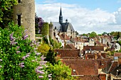 Colegiata de San Juan Bautista. Fundada por Imbert de Batarnay hacia el 1520 y clasificada como Monument historique desde 1840, castillo del conde Branicki, Montrésor, departamento de Indre y Loira, France,Western Europe.