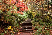 Stone stairs are a pathway through trees laden with fall leaves