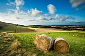 Summer afternoon in South Downs National Park, East Sussex, England.