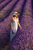 Woman with hat in a lavender field. Plateau de Valensole, Alpes-de-Haute-Provence, Provence-Alpes-Côte d'Azur, France, Europe.