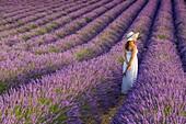 Woman with hat in a lavender field. Plateau de Valensole, Alpes-de-Haute-Provence, Provence-Alpes-Cote d'Azur, France, Europe.