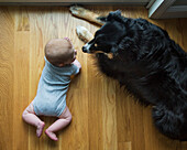 High Angle View of Baby and Dog Looking at Each Other while Laying on Wood Floor
