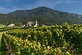 Chateau Maison Blanche, Vineyards , Yvorne,  Lavaux region, Lake Geneva, Swiss Alps,  Switzerland