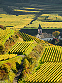 Village in the vineyards in autumn, Altvogtsburg, Oberbergen, Kaiserstuhl, Baden-Württemberg, Germany