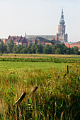 Wide pastures with a view of Dom, Greifswald, Baltic Sea coast, Mecklenburg-Vorpommern, Germany
