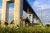 Bridge to Rügen with flower meadow in front. Stralsund, Baltic Sea Coast, Mecklenburg-Western Pomerania Germany