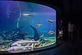 Aquarium with sturgeons in the Ozeaneum, Stralsund, Ostseeküste, Mecklenburg-Vorpommern, Germany