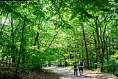 Young people are hiking in the National Park, Wollin, Baltic Sea coast, Poland