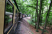 Blick aus der Dampfeisenbahn Rasender Roland in einen Wald, Rügen, Ostseeküste, Mecklenburg-Western Pomerania, Deutschland