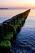 Groyne with algae in the evening light, Usedom, Ostseeküste, Mecklenburg-Western Pomerania Germany
