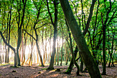 Darsser Jungle, Baltic Sea Coast, Mecklenburg-Western Pomerania, Germany