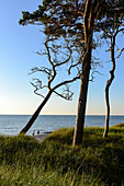 People at Darsser Weststrand, Baltic Sea Coast, Mecklenburg-Western Pomerania Germany