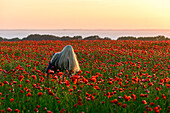 Young woman with long blond hair sits in poppy field on Rügen, Baltic Sea Coast, Mecklenburg-Vorpommern, Germany