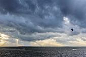 Kitesurfing and windsurfing in front of Hiddensee on the island of Ummanz, Rügen, Ostseeküste, Mecklenburg-Western Pomerania, Germany