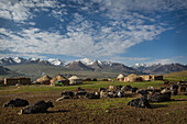 Khash Goz village with yurts and yaks, Afghanistan, Pamir, Asia