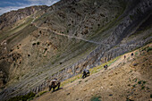 Trekking and trading on the old trade route to China, Wakhan, Pamir, Afghanistan, Asia
