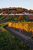 Wine cellars at Galgenberg of Wildendürnbach, Lower Austria, Europe