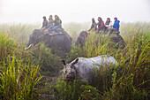Indian rhinoceros in Kaziranga national park, Assam, India, Asia