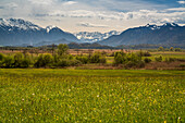 Springtime in the Murnauer Moos with view to Karwendel, Wetterstein and Ammer Mountain Range, Grafenaschau, Upper Bavaria, Germany