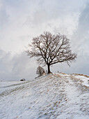 Winter landscape with Mesnerhauskapelle on the hill, Aidling, Upper Bavaria, Germany